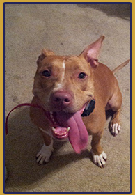 River City Dog Training believes training your dog enables him or her to be happier.