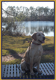 The Flood Tide board and train program is a premiere River City Dog Training dog service and provides lifetime support for you and your dog.